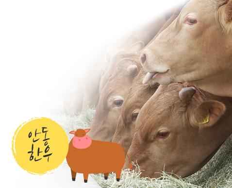 체계화된 사료, 사육으로 안전한 동물복지를 실천하는 GS리테일의 한우 우수지정목장을 소개합니다.